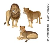 lion with two lionesses. vector ... | Shutterstock .eps vector #1104290390