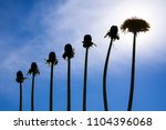 Small photo of Ladder of success, originality and development, different from other, dandelions against blue sky