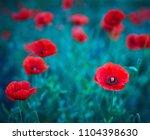 red poppies bloom in wild field ... | Shutterstock . vector #1104398630