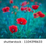 red poppies bloom in wild field ... | Shutterstock . vector #1104398633