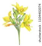 Stock photo bouquet of yellow lilies flower hemerocallis lilioasphodelus also called lemon lily yellow 1104402074