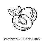 apricot half fruit vector... | Shutterstock .eps vector #1104414809