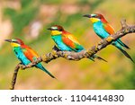 exotic little birds sit on the... | Shutterstock . vector #1104414830