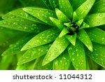 Close Up Of Fresh Green Foliag...