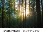 pine forest silhouette against... | Shutterstock . vector #1104449549