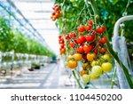 beautiful red ripe tomatoes... | Shutterstock . vector #1104450200