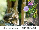 wonders of the brazilian fauna | Shutterstock . vector #1104482618