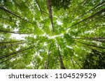 green tree and rain forest down ... | Shutterstock . vector #1104529529