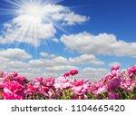 adorable pink garden...   Shutterstock . vector #1104665420