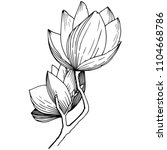 magnolia in a vector style... | Shutterstock .eps vector #1104668786