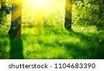 nature scene. summer park.... | Shutterstock . vector #1104683390