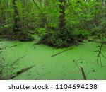 irdyn swamp  cherkasy region ... | Shutterstock . vector #1104694238