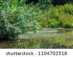summer landscape. swamp  marsh  ...   Shutterstock . vector #1104702518