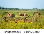 Old Wagon For Hay