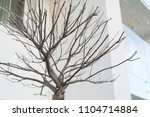 cutting branches at home | Shutterstock . vector #1104714884