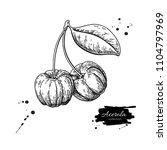 acerola fruit vector drawing.... | Shutterstock .eps vector #1104797969