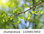spring branch with young green... | Shutterstock . vector #1104817853