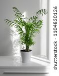 plant areca in a white pot on a ... | Shutterstock . vector #1104830126
