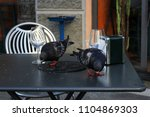 Small photo of Barefaced pigeons are stealing crumbs from a restaurant table, Imperia, Italy