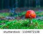 amanita muscaria. red poisonous ... | Shutterstock . vector #1104872138