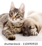 Stock photo puppy and kitten isolated on white background 110490920
