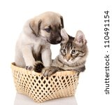Stock photo dog and cat together isolated on white background 110491154
