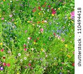 Wild Flowers Background
