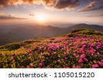 mountains during flowers... | Shutterstock . vector #1105015220