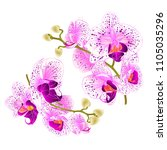 branch orchids   purple and... | Shutterstock .eps vector #1105035296
