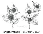sketch floral botany collection.... | Shutterstock .eps vector #1105042160