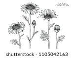 sketch floral botany collection.... | Shutterstock .eps vector #1105042163