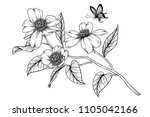 sketch floral botany collection.... | Shutterstock .eps vector #1105042166