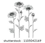 sketch floral botany collection.... | Shutterstock .eps vector #1105042169