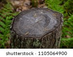 tree stump close up maple old...   Shutterstock . vector #1105064900