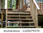 puppy dog laying on porch...   Shutterstock . vector #1105079570