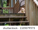puppy dog laying on porch...   Shutterstock . vector #1105079573