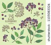 collection of elderberry black  ... | Shutterstock .eps vector #1105083326