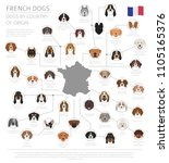 dogs by country of origin.... | Shutterstock .eps vector #1105165376