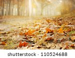 Dry Oak Leaves On The Ground I...