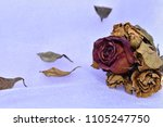 Bouquet With Rose And Dry Whit...