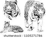 vector drawings sketches... | Shutterstock .eps vector #1105271786