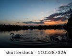 Swan On The Lake During Sunset.