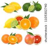 collage of fresh citrus... | Shutterstock . vector #1105302740