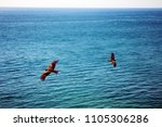 sea eagles. kites soars over... | Shutterstock . vector #1105306286