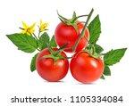 tomato isolated on white... | Shutterstock . vector #1105334084