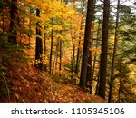 colorful trees deep in the... | Shutterstock . vector #1105345106