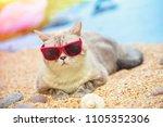 portrait of cat wearing... | Shutterstock . vector #1105352306