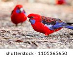 Parrots Australia. The State Of ...
