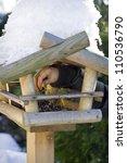 Wooden Feeder For Birds In...