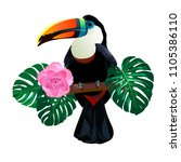 bright toucan bird sitting on... | Shutterstock .eps vector #1105386110